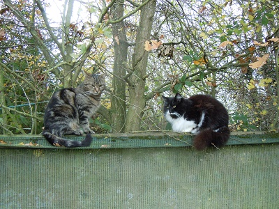Mr Piggus and Styler, two of the nursery cats.